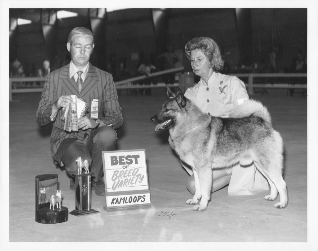 Trygg winning Best of Breed at the Norwegian Elkhound Specialty in Kamloops