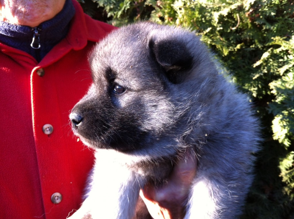 One of the pups from the new litter available to take home February 2015
